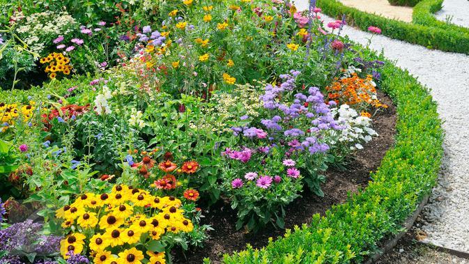 12 Jenis Tanaman Hias Bunga Outdoor Percantik Pekarangan Rumah Tanpa Ribet Hot Liputan6 Com