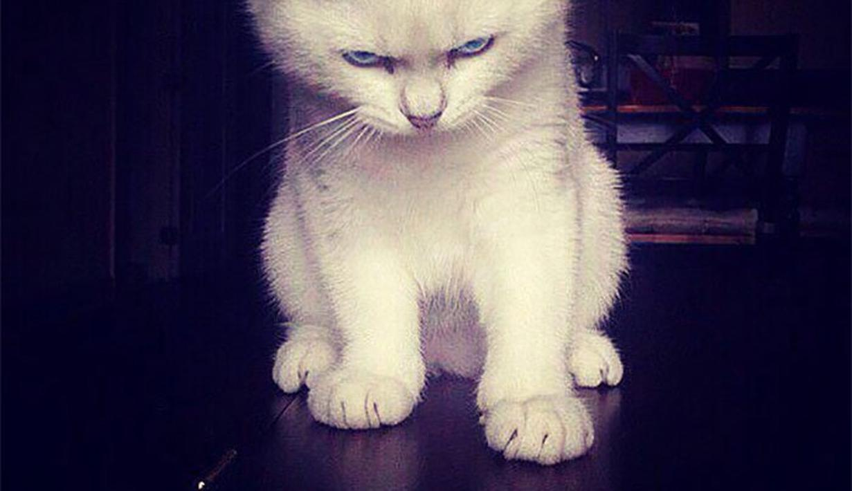 Unduh 94+  Gambar Kucing Marah Lucu Terbaik Gratis