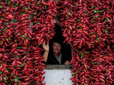 Seorang warga berdiri dari balik jendela yang dipenuhi paprika pada tembok rumahnya untuk dikeringkan, di Desa Donja Lakosnica, Serbia, 6 Oktober 2016. Saat musim panen, warga menjemur paprika di dinding hingga atap rumah. (REUTERS/Marko Djurica)