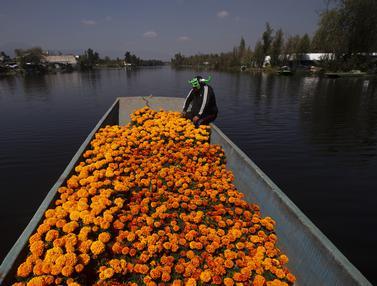 FOTO: Panen Bunga Marigold Jelang Day of the Dead di Meksiko