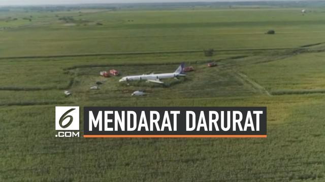 Sebuah pesawat penumpang Rusia jenis airbus  terpaksa mendarat darurat di ladang jagung setelah bertabrakan dengan kawanan burung. Beruntung tidak ada korban jiwa dalam kecelakaan ini.