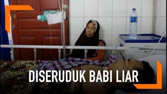 Satu keluarga di Padang terluka setelah diseruduk babi liar yang tiba-tiba masuk pekarangan rumahnya.