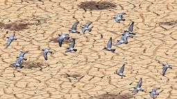 Kawanan burung merpati terbang di atas bendungan El-Haouareb yang kekeringan di dekat Kairouan, sekitar 160 km selatan Tunis, Tunisia, 13 Juli 2017. Wilayah ini mengalami kekeringan parah yang disebabkan oleh kemarau berkepanjangan. (FETHI BELAID/AFP)