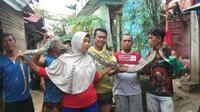 Penemuan ular di Bekasi. (Liputan6.com/ Bam Sinulingga)
