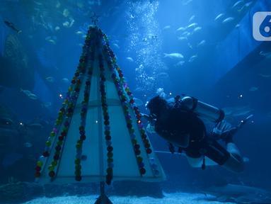 Penyelam melintasi pohon Natal yang terbuat dari bahan daur ulang di Jakarta Aquarium dan Safari, Sabtu (19/12/2020). Jakarta Aquarium dan Safari menghias pohon Natal dari bahan daur ulang mulai 20-27 Desember 2020 untuk memperingati perayaan Natal. (merdeka.com/Imam Buhori)