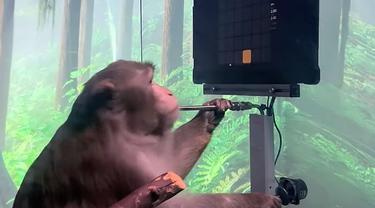 Monyet main gim