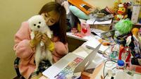 Perusahaan ini mengizinkan karyawannya untuk membawa binatang peliharaannya untuk menemani bekerja setiap hari.