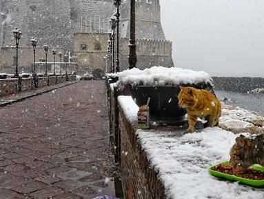 Dua ekor kucing memakan makanan saat salju tebal turun di sekitar Castel dell'Ovo, Naples, Italia, Selasa (27/2). (ANSA/CIRO FUSCO)