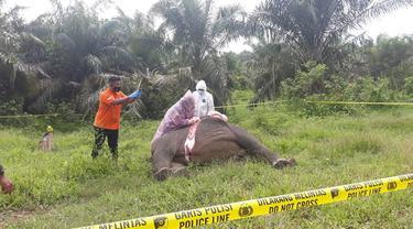 Tim dari otoritas sedang menggelar olah TKP penemuan bangkai gajah tanpa kepala (Liputan6.com/Ist)