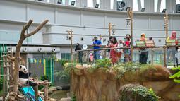 Para pengunjung mengabadikan foto panda raksasa Yi Yi di Pusat Konservasi Panda Raksasa Kebun Binatang Negara dekat Kuala Lumpur, Malaysia, 19 Desember 2020. Berdasarkan penilaian saat ini, Kebun Binatang Negara akan tetap dibuka sesuai jadwal. (Xinhua/Chong Voon Chung)