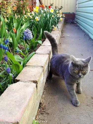 Fedya kucing yang memiliki mata yang unik. a