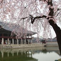 Korea Selatan/KIMDAEJEUNG Pixabay