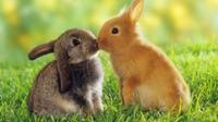 Perilaku kawin memang lazim dilakukan hewan untuk mendapatkan keturunan dan mempertahankan jenis spesiesnya (Sumber foto: upstation.com)