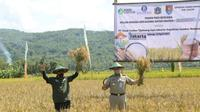 Gubernur DKI Jakarta Anies Baswedan dan Bupati Cilacap Tatto Suwarto Pamuji panen raya padi di lahan yang dipersiapkan untuk menyuplai beras ke Jakarta. (Foto: Liputan6.com/Humas Pemkab Cilacap)