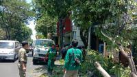 Dua pohon tumbang terjadi di dua lokasi yang berbeda di Surabaya, yaitu di Jalan Ahmad Yani, tepat di depan RSAL dr Ramelan dan di Jalan Kertajaya No. 240 (Foto: Liputan6.com/Dian Kurniawan)