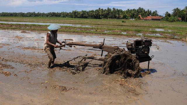 Tumbuhkan Sektor Pertanian Ri Kein Contoh Negara Ini Bisnis