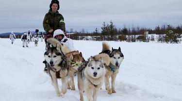 Tentara Brigade Arktik Armada Utara Rusia melatih anjing di Rusia, Selasa (26/11/2019). Brigade Arktik Armada Utara Rusia merekrut anjing siberia husky untuk memperkuat Angkatan Bersenjata Rusia. (Andrei Luzik, Russian Defense Ministry Press Service via AP)