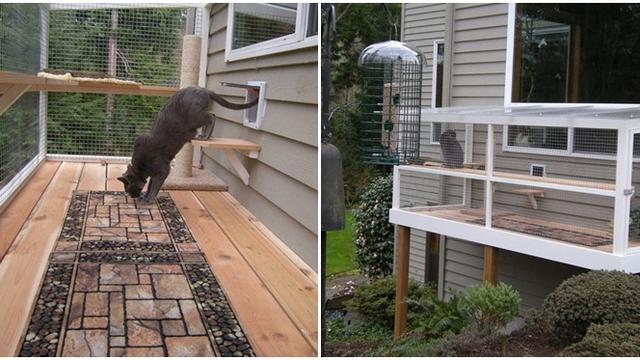 Niat Banget 6 Kandang Kucing Ini Punya Desain Dengan Arsitektur Keren Hot Liputan6 Com