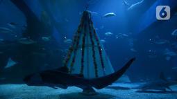 Ikan-ikan melintasi pohon Natal yang terbuat dari bahan daur ulang di Jakarta Aquarium dan Safari, Sabtu (19/12/2020). Jakarta Aquarium dan Safari menghias pohon Natal dari bahan daur ulang mulai 20-27 Desember 2020 untuk memperingati perayaan Natal. (merdeka.com/Imam Buhori)