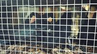 Burung Rangkong yang gagal diselundupkan ke Malaysia. (Liputan6.com/Istimewa/M Syukur)