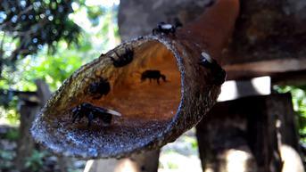 Mengintip Budidaya Madu Trigona di Objek Wisata Batu Katak Langkat Sumut