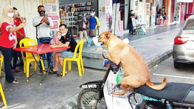 Sudah Dilatih Sejak Lama, Anjing Ini Tak Pernah Lupa untuk Gunakan Masker