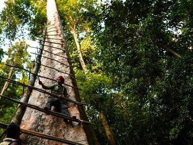 Pemburu madu tradisional Malaysia Zaini Abdul Hamid memperbaiki tangga untuk memanen sarang lebah di atas pohon Tualang raksasa di hutan Ulu Muda di Sik, sebelah timur laut negara bagian Malaysia, Kedah (11/3). (AFP Photo/Manan Vatsyayana)