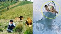(Foto: Brilio.net) Editan foto bersama hewan buas ini  justru bikin kamu ketawa dan gagal paham.
