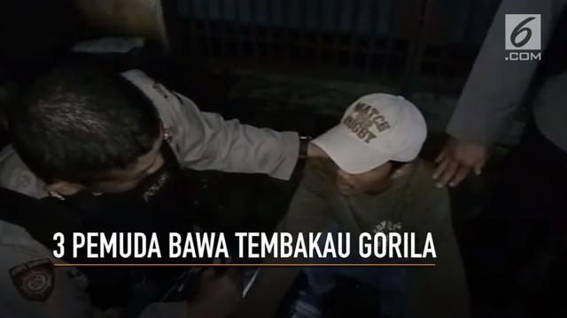 Tiga pemuda di Kramat Jati, Jakarta Timur, terciduk membawa tembakau gorila.