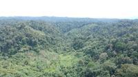 Kondisi utupan Hutan Desa Rio Kemuyang di Desa Sungai Rambun, Kabupaten Merangin, Jambi (foto: Liputan6.com/BPSKL untuk Gresi Plasmanto)