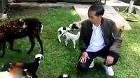 Jokowi bahkan hafal jumlah kambing miliknya.