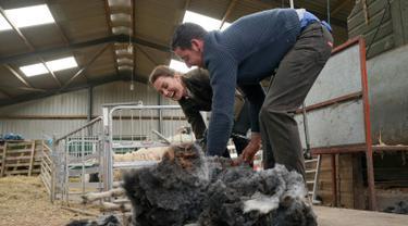 Duchess of Cambridge Kate Middleton (kiri) mencukur bulu domba saat berkunjung ke Deepdale Hall Farm, sebuah peternakan domba tradisional di Patterdale, Cumbria, Inggris, Selasa (11/6/2019). (Owen Humphreys/POOL/AFP)