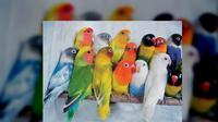 AR kemudian berusaha meraih sangkar love bird menggunakan jolok bambu yang panjangnya 3 meter.
