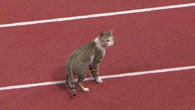 kucing ikut Asian Games (foto: brilio.net)
