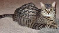 Tak Kalah Trendi, Ini 6 Gaya Rambut Kucing yang Bikin Ngakak (sumber: Liveabout)