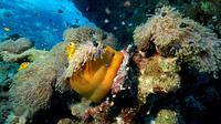 Ilustrasi keindahan bawah laut. (dok. Kracmar/Pixabay/Tri Ayu Lutfiani)