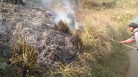 Tim gabungan pemadam kebakaran Gunung Semeru berupaya memadamkam kobaran api dengan ranting pohon (BB TNBTS)