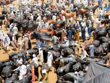 Kesibukan Pasar Ternak di Pakistan Jelang Idul Adha