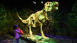 Sky Itomi (3) memandangi patung 'Dinosaur Skeleton' yang terbuat dari 80.020 keping lego saat pratinjau pameran The Art of the Brick di California Science Center, Los Angeles, California, Amerika Serikat, Rabu (26/2/2020). Pameran ini akan dibuka pada 28 Februari 2020. (AP Photo/Chris Pizzello)