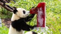 Panda raksasa kembali merayakan ulang tahun pertama mereka di Kebun Binatang Berlin, Senin, 31 Agustus 2020 (Dok.Instagram/@zooberlin/https://www.instagram.com/p/CEi-nfICZkL/Komarudin)