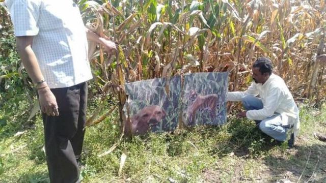 Srikant mendapatkan ide itu ketika dia mengamati seorang petani lain menggunakan boneka harimau di ladangnya untuk menakuti monyet.