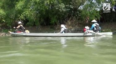 Ikan Arapaima terlihat muncul di Kali Surabaya, Gresik. Warga melakukan perburuan ikan air tawar itu di sepanjang aliran kali.