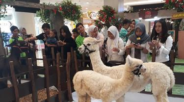 Alpaca di Tangcity Mall