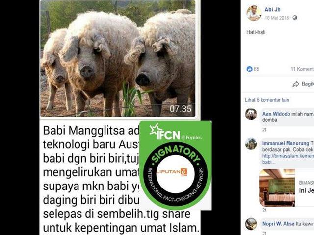 81+ Gambar Babi Di Sajadah Kekinian