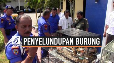 Ditpolair Polda Jatim menangkap 4 ABK KM Senja Persada di Pelabuhan Kalimas, Tanjung Perak, Surabaya. Mereka ditangkap karena menyelundupkan 146 burung langka asal Papua.