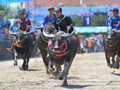 Para peserta berkompetisi dalam balap kerbau di Chonburi, Thailand, pada 1 Oktober 2020. Ratusan kerbau mengikuti festival balapan yang digelar setiap Oktober di kalangan petani untuk merayakan panen padi. (Xinhua/Rachen Sageamsak)