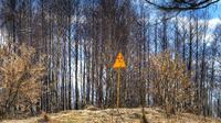 Rambu peringatan radioaktivitas di sebuah bukit di ujung timur Red Forest atau Hutan Merah di Chernobyl. (Creative Commons)