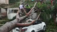 Hujan deras di Kabupaten Cianjur, Jawa Barat menyebabkan sejumlah pohon tumbang. Salah satunya menimpa mobil Toyota Fortuner yang terparkir di halaman Kantor Pemkab Cianjur. (Achmad Sudarno/Liputan6.com)