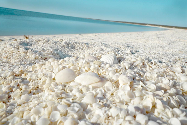 Shell Beach Australia. Source: http://www.trover.com