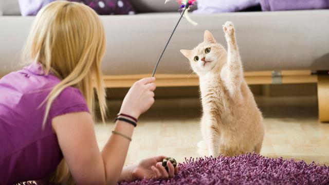 Jadi Agresif, Kenali 5 Tanda Kucing Butuh Lebih Banyak Waktu Bermain -  Citizen6 Liputan6.com